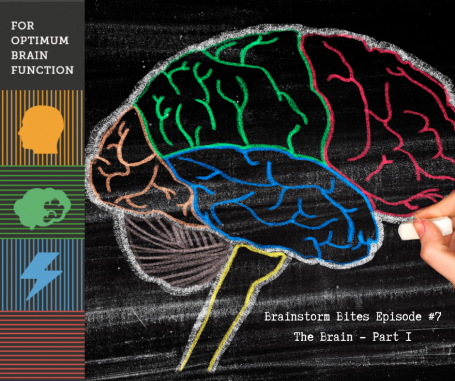 The Brain, Part 1 - Podcast 7--